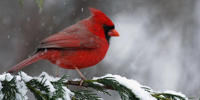 25% off Wild Aspen bird food